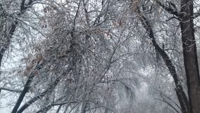 Эти деревья старе чем мое время 24 Стоковая Фотография