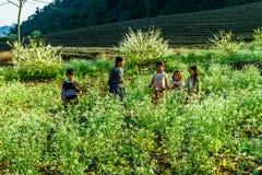 Этнические дети играя в плантации сливы на случае лунного Нового Года Стоковое фото RF