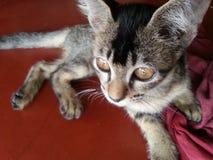 Этот кот любит сделать модельное государство стоковые фото