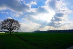 Это дерево на пасмурный день стоковая фотография