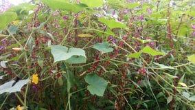 Это изображение изображение природы зеленого растения стоковое фото