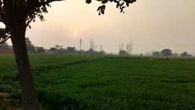 Это красивый pic захода солнца в поле моей деревни Стоковые Фото