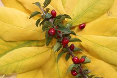 Это красные ягоды Стоковые Изображения