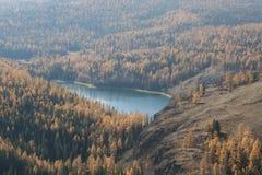Это место в толстом лесе, игр-звероловстве около дома, около омрачать лес на красивом реке и формирует озеро Стоковая Фотография RF