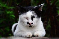 Это милый кот имеет усик Так, каждый дальше вызовите его японцем Стоковые Изображения