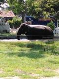 Это слон в Шри-Ланка стоковое фото