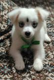 Это cutepie doggy стоковые фотографии rf