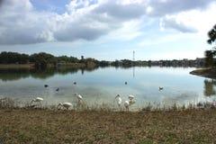 Озеро Флорида Стоковая Фотография