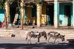 Эфиопия, Axum, ослы в руинах ванн ферзя Saba стоковые изображения rf