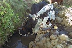 Эфиопская вода усилий женщины от естественного колодца стоковые фотографии rf