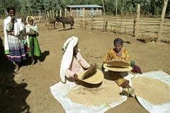Эфиопские женщины отделяют мякину от зерна Стоковая Фотография