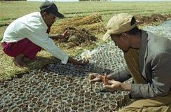 Эфиопские люди засаживают семена дерева в проекте лесохозяйства стоковая фотография