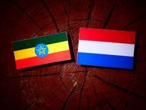 Эфиопский флаг с флагом голландца на изолированном пне дерева Стоковое фото RF