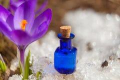 Эфирное масло крокуса в красивой бутылке на таблице Стоковые Изображения