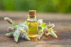 Эфирное масло мяты в красивой бутылке на таблице Стоковые Фотографии RF