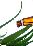 эфирное масло vera бутылки алоэ Стоковое Изображение