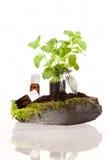 Эфирное масло трав стоковая фотография rf