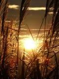 эффектный заход солнца Стоковое Фото