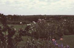 Эффектный ландшафт полей Стоковое Изображение