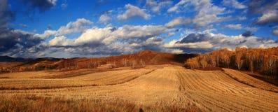 Эффектный пейзаж злаковика Внутренней Монголии Стоковая Фотография