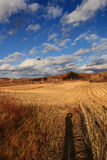 Эффектный пейзаж злаковика Внутренней Монголии Стоковые Фото