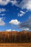 Эффектный пейзаж злаковика Внутренней Монголии Стоковая Фотография RF