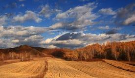 Эффектный пейзаж злаковика Внутренней Монголии Стоковое фото RF
