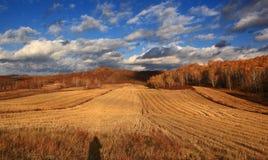 Эффектный пейзаж злаковика Внутренней Монголии Стоковые Изображения RF