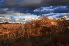 Эффектный пейзаж злаковика Внутренней Монголии Стоковые Изображения
