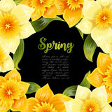 Элегантная предпосылка с желтым narcissus daffodil Цветок весны с стержнем и листьями Реалистическая картина Стоковое фото RF