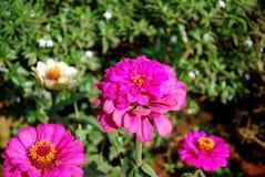 Элегантные цветки Стоковая Фотография RF