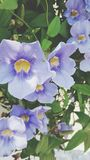 Элегантный фиолет Стоковая Фотография