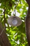 Электрическая лампочка вкладчика энергии LEB Стоковая Фотография