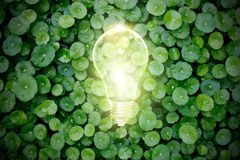 Электрическая лампочка освещает вверх в зеленом растении, экологической концепции Стоковые Фотографии RF