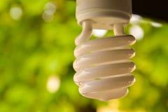 Электрическая лампочка Eco Стоковая Фотография RF