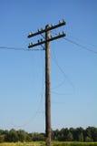 Электрическая опора линии электропередач столба Обрыв провода после урагана Сломленная линия электропередач Стоковое фото RF