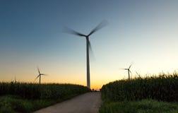 Электрический заход солнца на кукурузном поле Стоковые Фото
