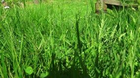 Электрический триммер лужайки кося траву на лужайке 4K акции видеоматериалы