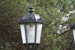 Электрический фонарный столб с предпосылкой дерева Стоковая Фотография RF