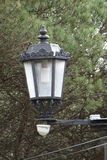 Электрический фонарный столб с предпосылкой дерева Стоковая Фотография