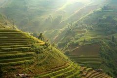 Электричество риса Вьетнама, который хранят на terreaced стоковые изображения rf