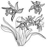 элементы конструкции флористические Стоковые Фото
