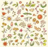 элементы конструкции флористические Стоковые Изображения