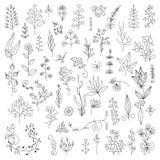 Элементы нарисованные рукой винтажные флористические Стоковое Фото