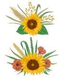Элементы флористического дизайна собрания декоративные Солнцецвет, ячмень, пшеница, рожь, рис, мак бесплатная иллюстрация