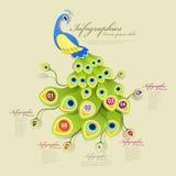 Элементы шикарного павлина infographic Стоковое Изображение