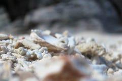 любить пляжа Стоковое Изображение