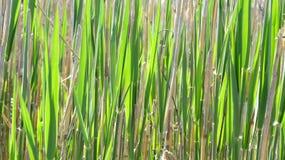 Юбка травы Стоковое Изображение