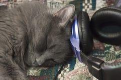любовник Tomcat-музыки Стоковые Фото