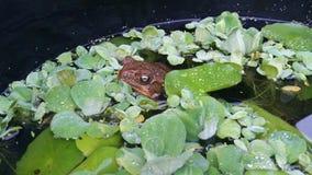 любознательная жаба Стоковые Изображения RF